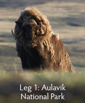 Menu-Photos,2015-Leg1,Aualvik