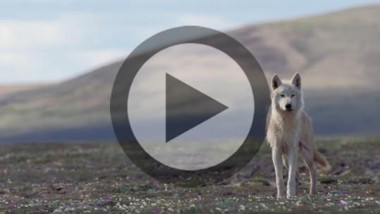 ITA2015-Video02-ANP